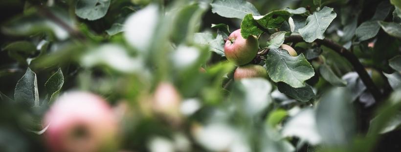 On Apples and Trees reblog Ken Labbe Priestwife